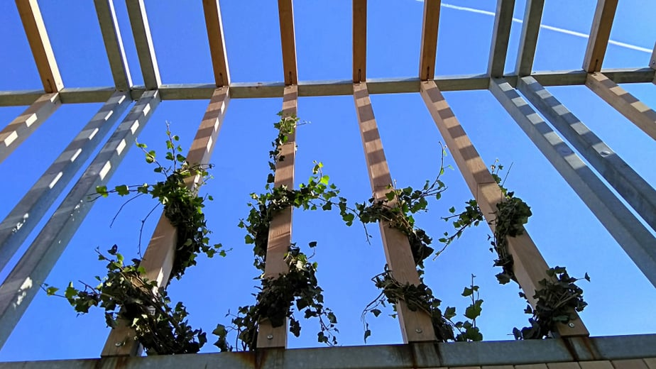 25 Beautiful Trellis Ideas For Your Home In 2020 Lots Of Pictures