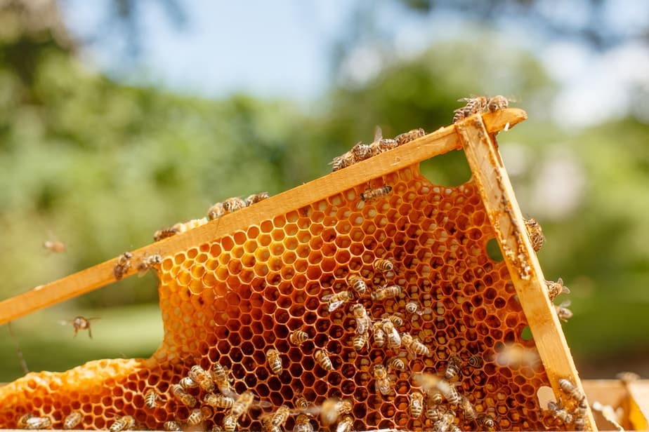 How to Raise Bees in Your Backyard: A Beginners Guide 2019