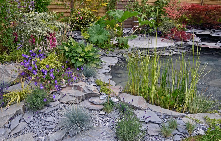 Best Plants For Water Gardens Images