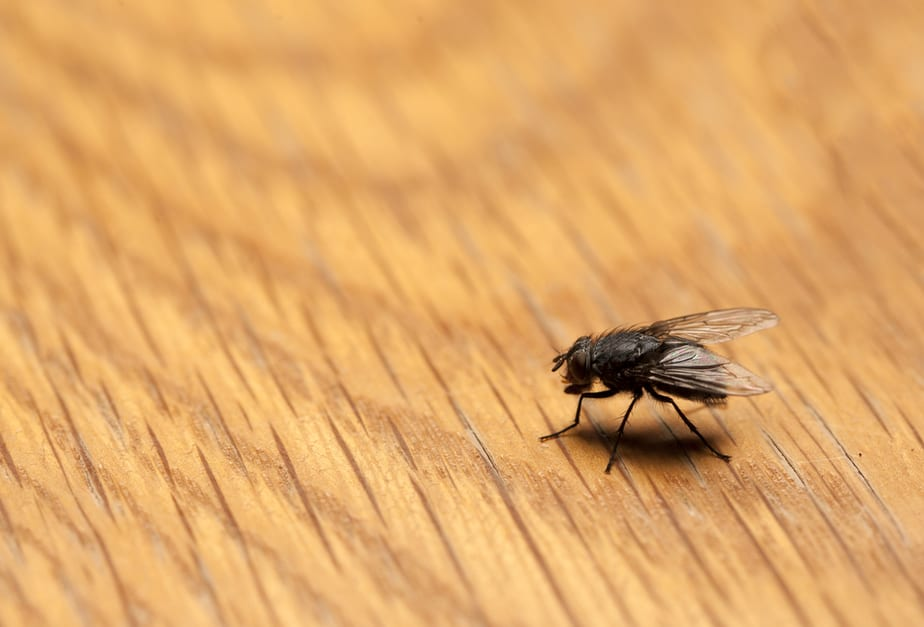 How To Get Rid Of Flies On The Patio: Quick Solutions 2020